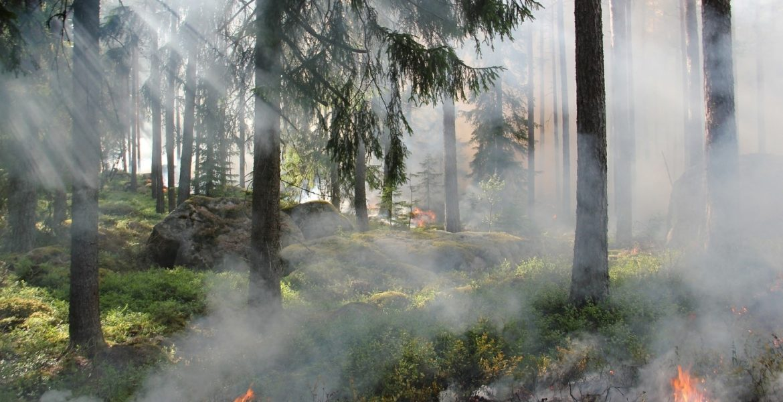 Benefits Of Prescribed Wildfire