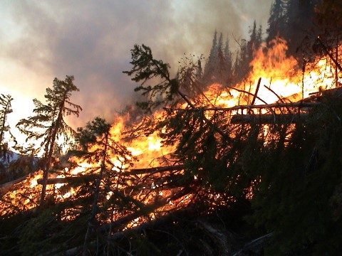 Future Of Wildfires