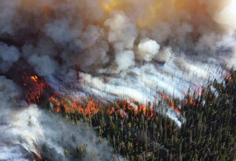Herbicides and Wildfires