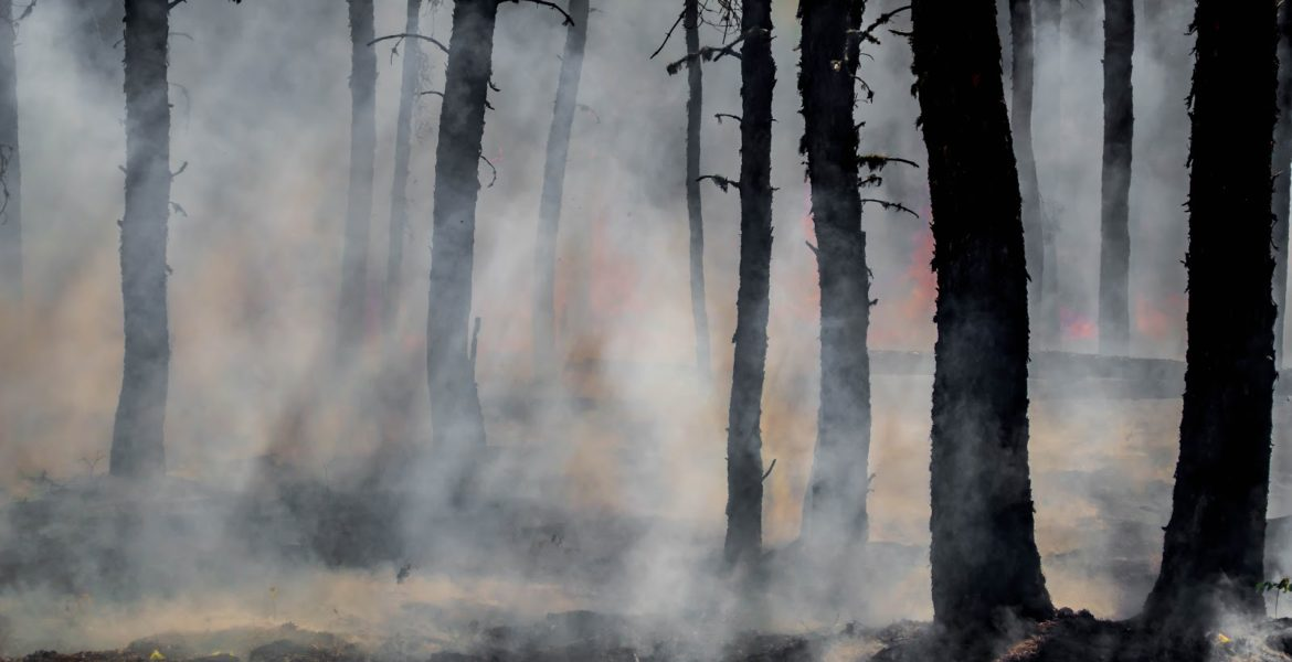 Silhouettes of trees with smoke rising from the ground.