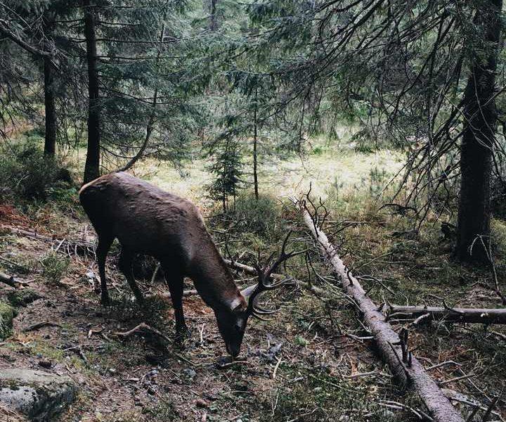 impact of wildfire on wildlife