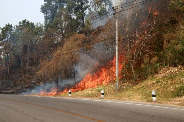 top human forest fire causes